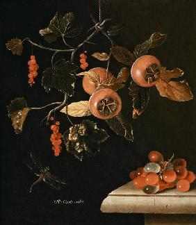 Still Life of Medlars, Redcurrants, Grapes and a Dragonfly 1686