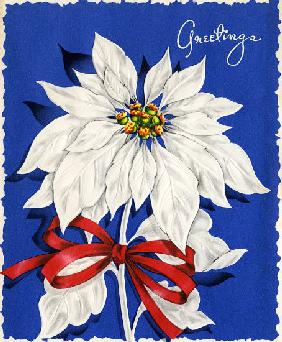 Vintage Illustration of Christmas Poinsettia 1940s-50s