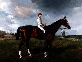"""St. Gatien"" with Charles Wood Up, at Newmarket 1885"