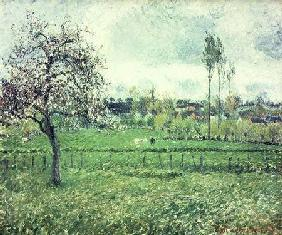 Meadow at Eragny 1885