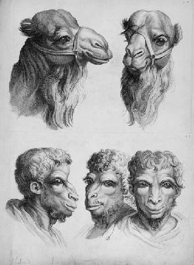 Similarities Between the Head of a Camel and a Man, from 'Livre de portraiture pour ceux qui commenc