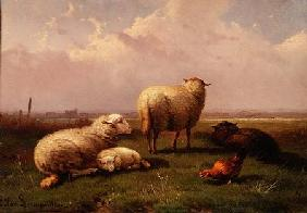 Sheep Dozing in a Pasture