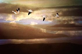 Morning Flight, Bosque