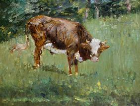 Young Bull in a Meadow 1881
