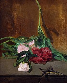 Stem of Peonies and Secateurs c.1864