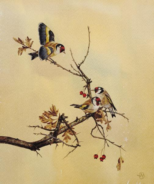 Goldfinches c.1890  on