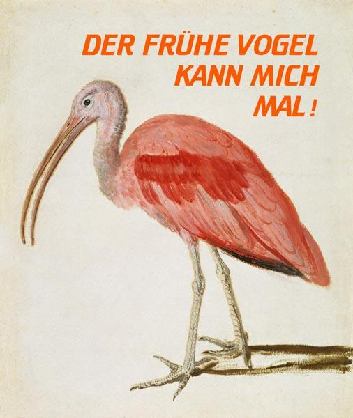 Portrait of a Scarlet Ibis Bird mit Worten