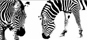 Zebra abstract II