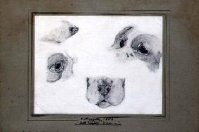 Studies of the Artist's Dog 1850 cil o