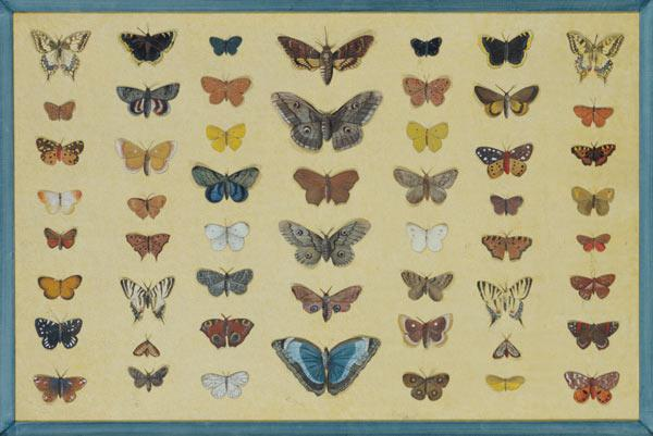 A collage of butterflies and moths including the Camberwell Beauty, the British Swallowtail, the Sca c.1830  on
