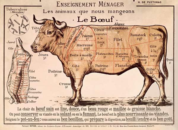 Beef: diagram depicting the different cuts of meat (colour litho) 19th