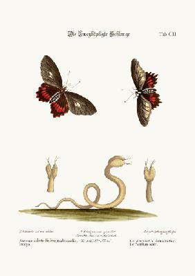 The Double-headed Snake. The Black Butterflies 1749-73
