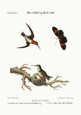 The red-throated Hummingbird 1749-73