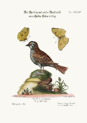The White-throated Sparrow, and the Yellow Butterfly 1749-73