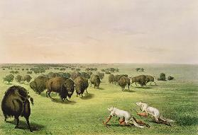 Hunting Buffalo Camouflaged with Wolf Skins, c.1832