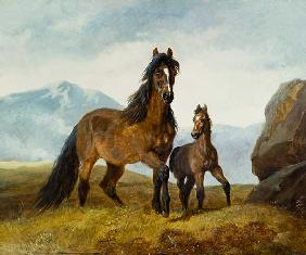 A Welsh Mountain Mare and Foal 1854