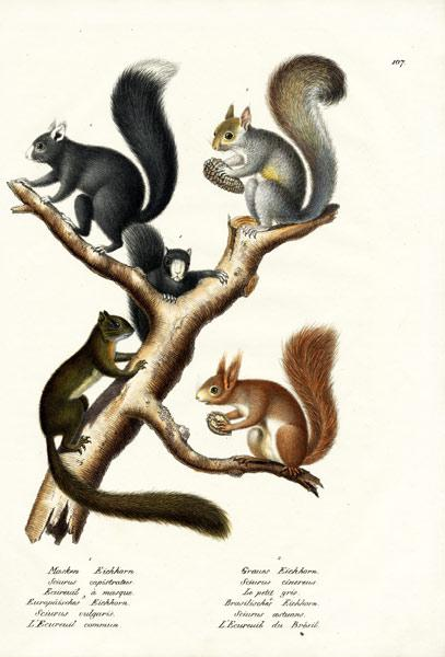 Different Kinds Of Squirrels 1824