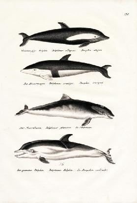 Different Kinds Of Dolphins 1824