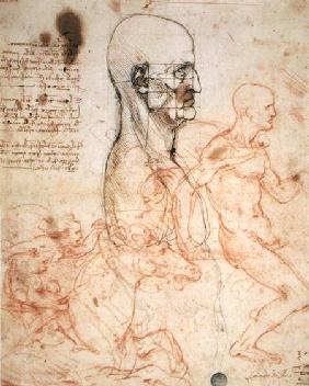 Anatomical studies c.1500-07