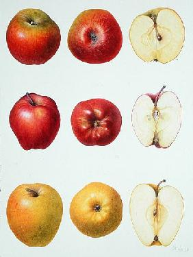 Six Apples, 1996 (w/c on paper)