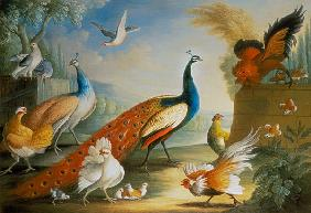 Two Peacocks, Doves, Chickens and a Rooster in a Parkland