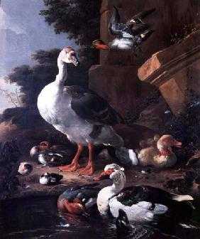 Waterfowl in a classical landscape 17th centu