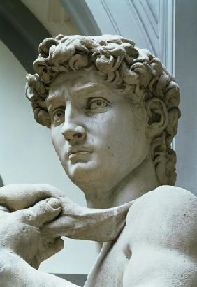 David, detail of the head by Michelangelo Buonarroti (1475-1564) 1504