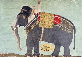 Portrait Of The Elephant  ''Alam-Guman Gajraj''