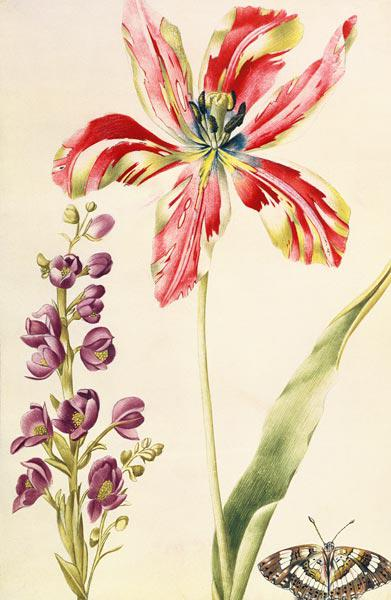 Tulip, Stocks and Butterfly c.1675