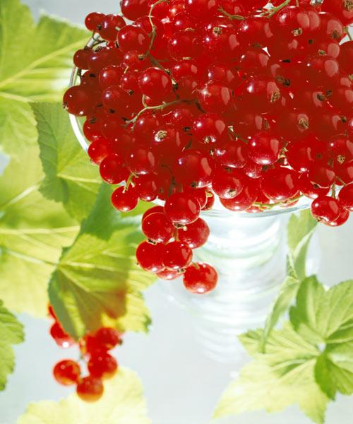 Redcurrants & leaves, 1996 (colour photo)