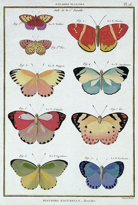 Butterflies from 'Histoire Naturelle des Insectes' by M. Olivier (coloured engraving) 1853