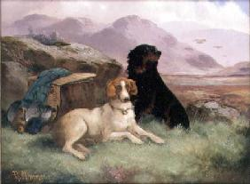 Gundogs (one of a pair)