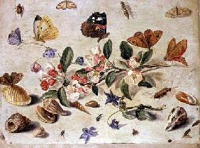 A Study of Flowers and Insects