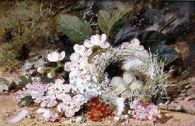 Still Life of Bird's Nest with Primulas